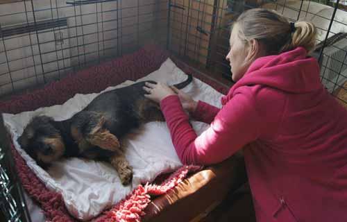 operera diskbråck hund